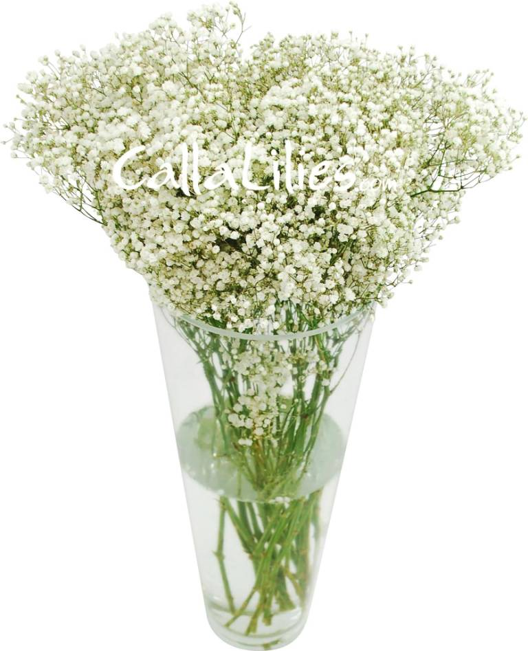 Awesome White Baby's Breath Flower For Home Decoration