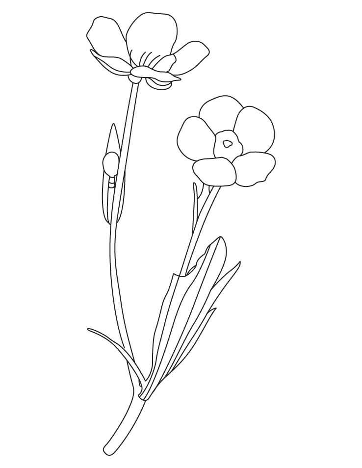 Beautiful Buttercup Drawing Art For Desktop