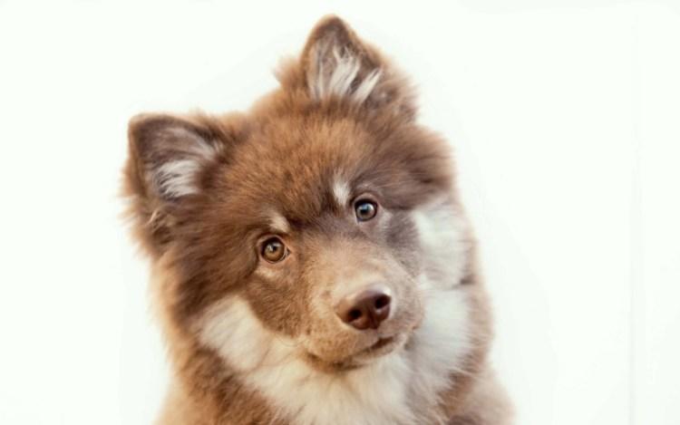 Beautiful Dog Looks To Us It Seems Full Hd Wallpaper