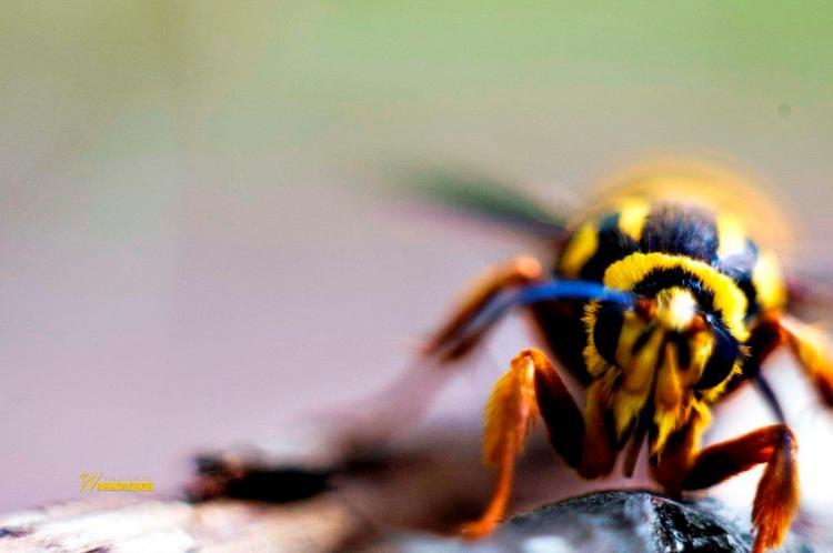 Beautiful Insect Close Of Yellow Full Hd Wallpaper