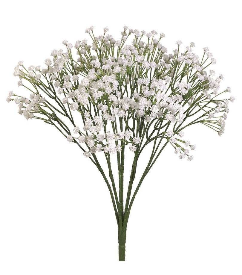 Best Baby's Breath Flower Plant For Decoration