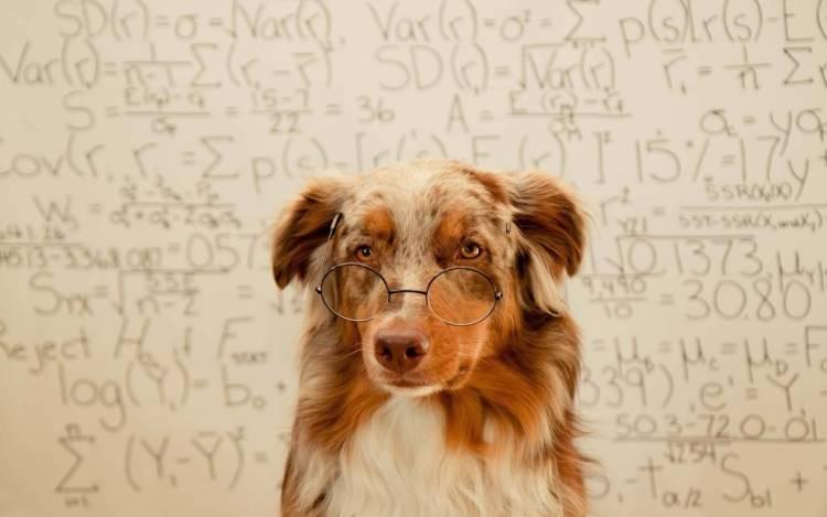 Brown Dog Teacher Full Hd Wallpaper