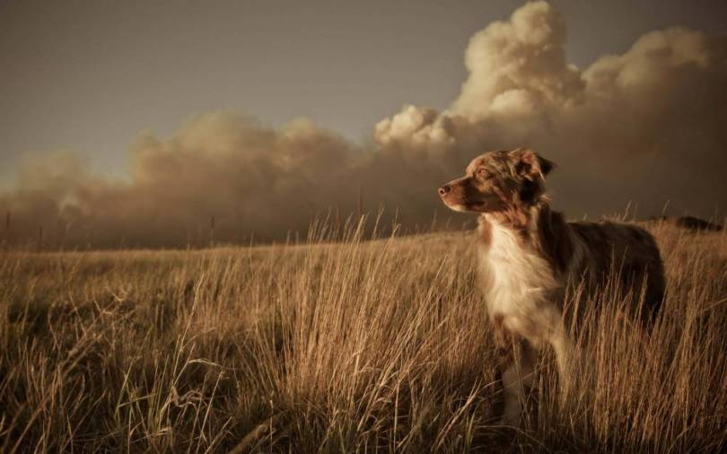 Brown Dog With Dense Clouds 4k Wallpaper