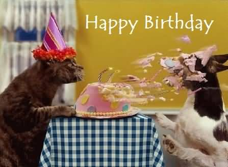 Cat And Dog Funny Happy Birthday Wishes Meme Birthday Wishes