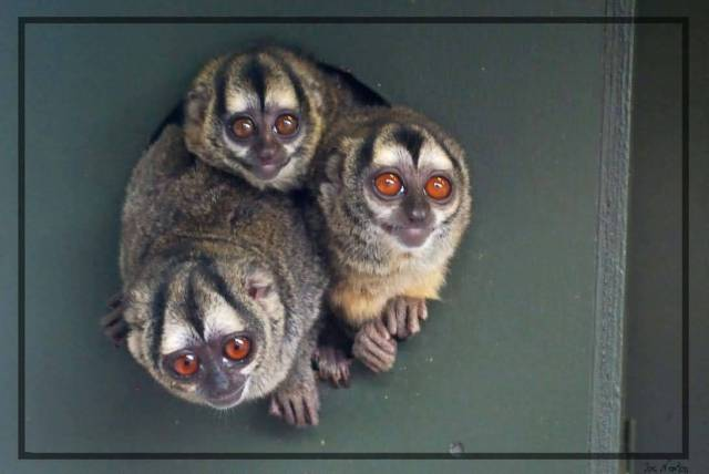 Cute Bushbabies 4k Wallpaper