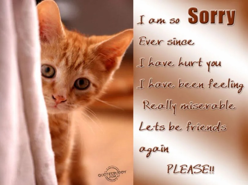 Cute Cat Saying I'm Sorry Message Image