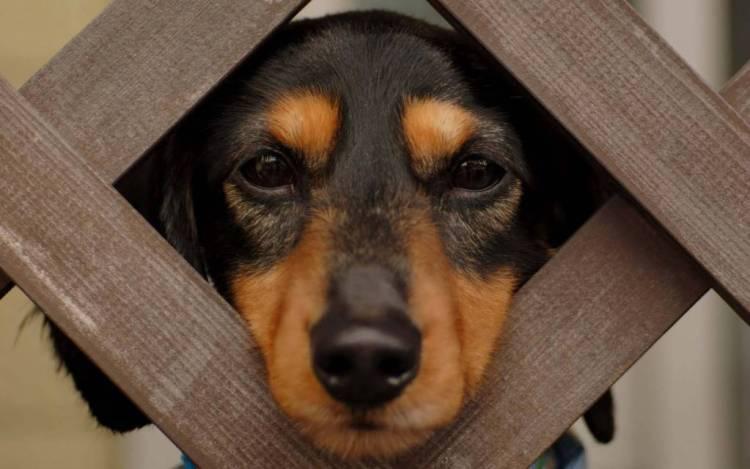 Cute Dog Sad Look At Us 4k Wallpaper