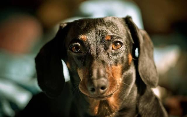 Cute Sad Dog Hd Wallpaper