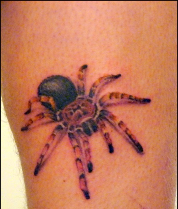 Extremely Red Yellow And Black Color Ink Lovely 3D Spider Tattoo On Girl's Arm