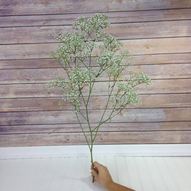 Fabulous White Baby's Breath Flower Wallpaper