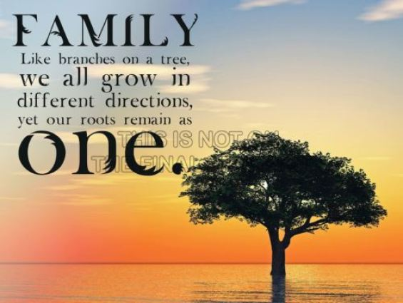 Family like branches in a tree we all grow in different directions yet our roots remain a