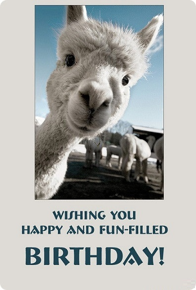 Funny Camel Wishes Happy Birthday Card
