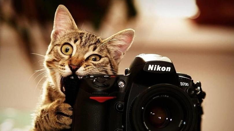 Funny Cat With Nikon Camera full HD Wallpaper
