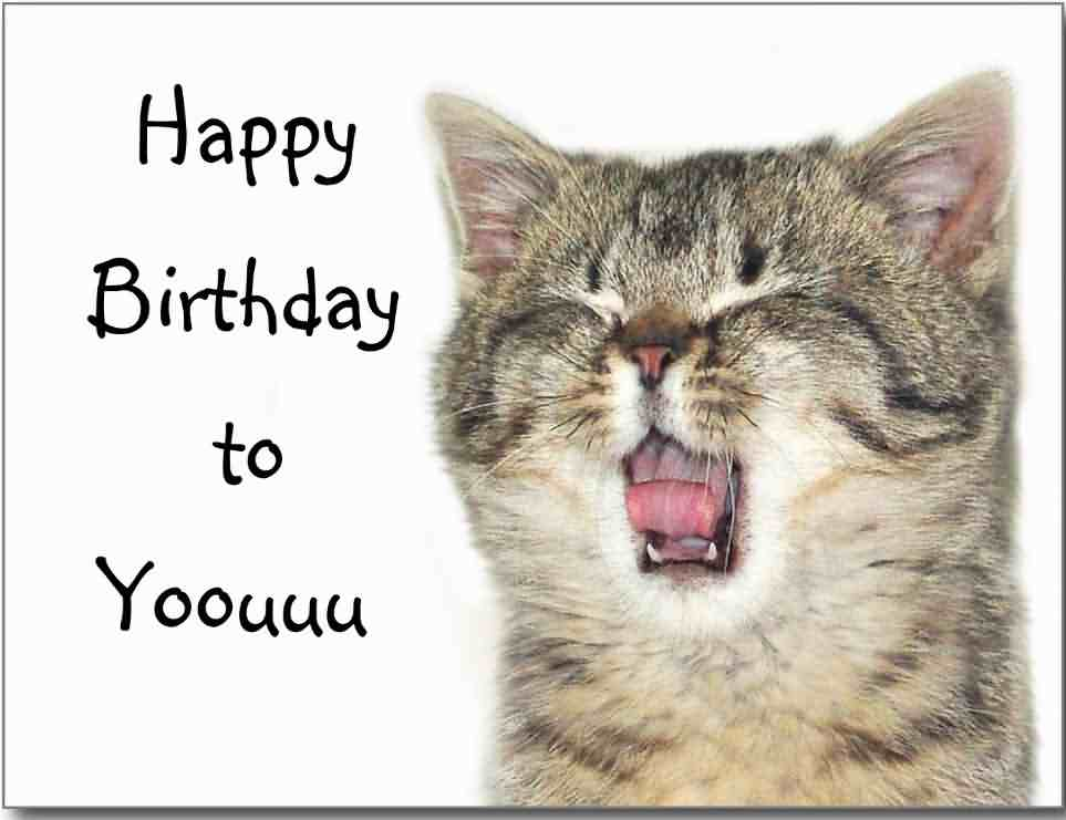 happy birthday image funny cat