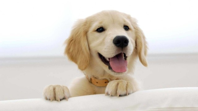 Funny Nice Dog 4k Wallpaper