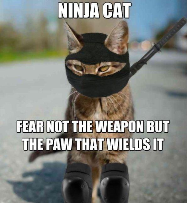Ninja Memes