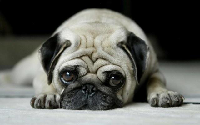 Good Sad Dog 4k Wallpaper