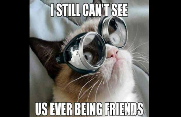 Grumpy Cat Meme I Still Cant See Us Ever Being Friends