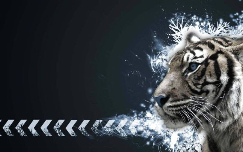 Horrible White Tiger looking great in HD Wallpaper