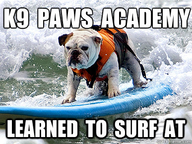 K9 Paws Academy Learned To Surf At Funny Ninja Memes Graphic
