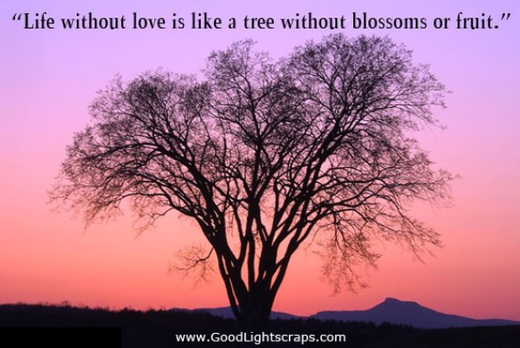 Life without love is like a tree without blossoms or
