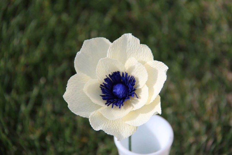 Marvelous White Anemone With Center Blue Flower Wallpaper