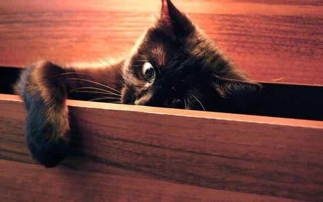Most Cutest Cat In The Drawer Full Hd Wallpaper