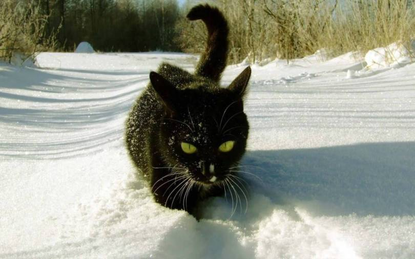 Most Fabulous Cat Dig In The Snow 4K Wallpaper