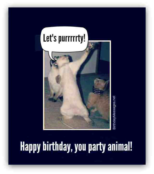 Most Funny Happy Birthday Cat Image