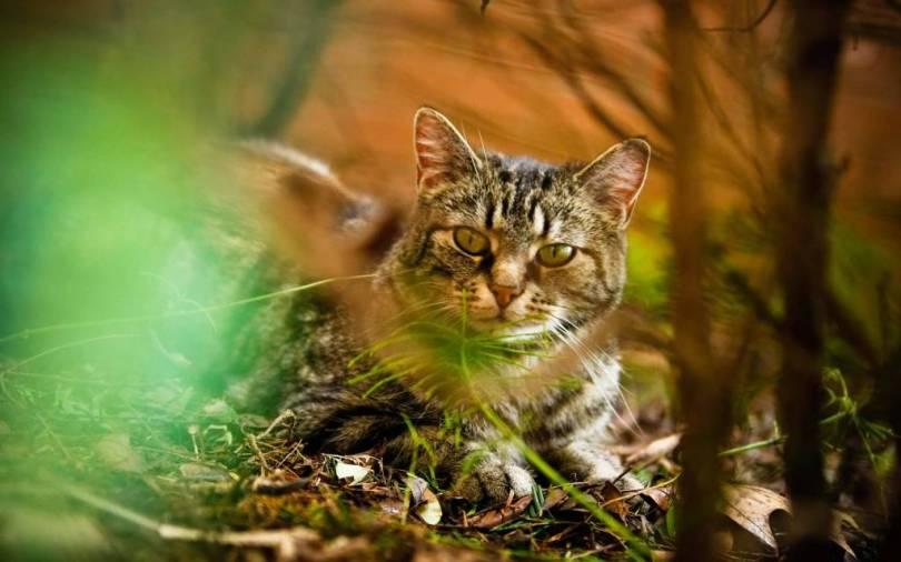 Most Wonderful Wonderful Cat Between Plants 4K Wallpaper