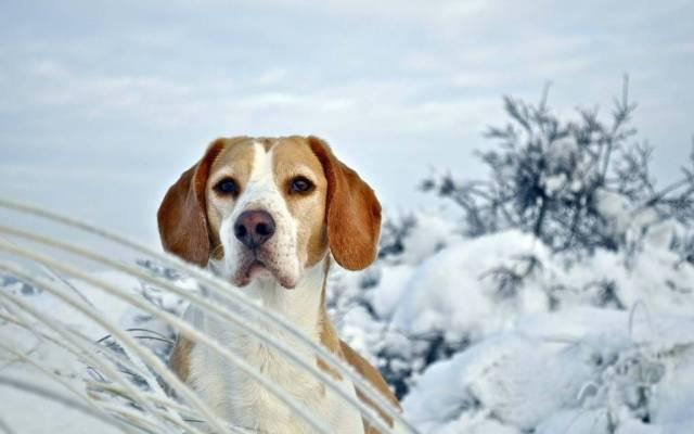 Nice Dog Between Heavy Snow 4k Wallpaper