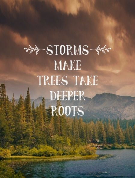 Storms make trees take deeper