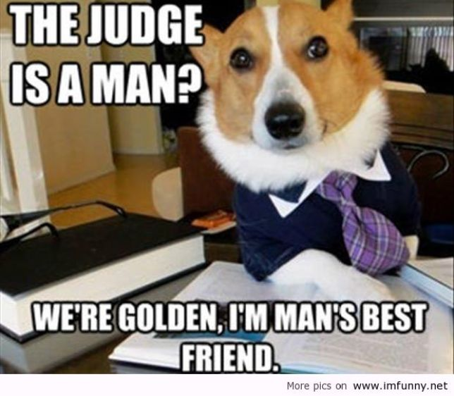 The Judge Is A Man We Are Golden I Am Mans Best Friend