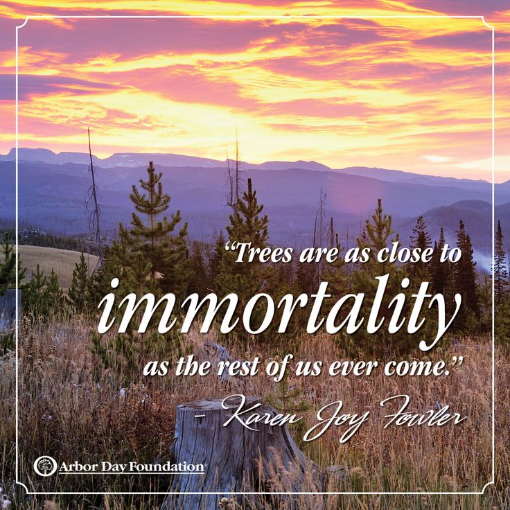 Trees are as close to immortality as the rest of us ever` Karen Joy Fowler