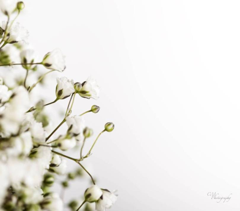 Unique White Baby's Breath Flower With Green Leafs