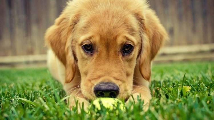 Very Cute Dog Look At Us Hd