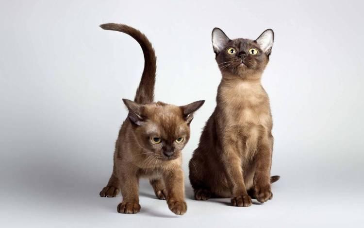 Very Cute Kittens Full HD 4K Wallpaper