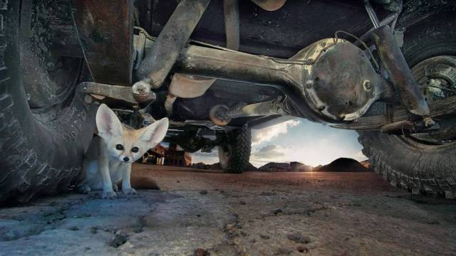 Cute Wallpaper Very Cute Small Animal Under The Vehicle Wheel Full Hd Wallpaper