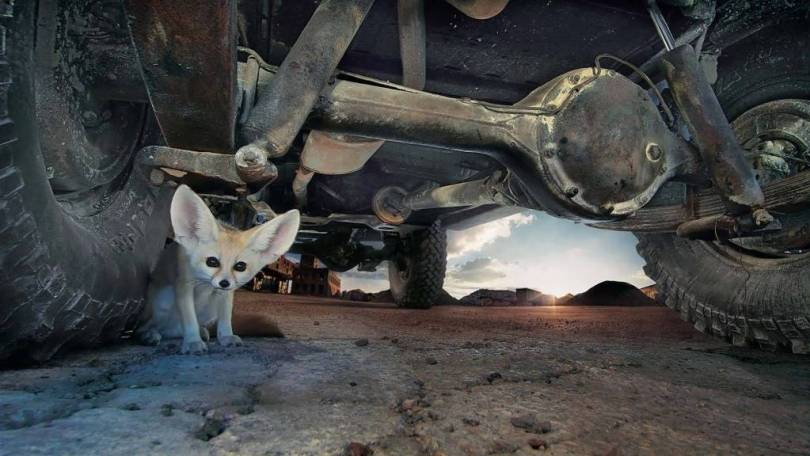 Cute Wallpaper Very Cute Small Animal Under The Vehicle Wheel Full Hd Wallpaper