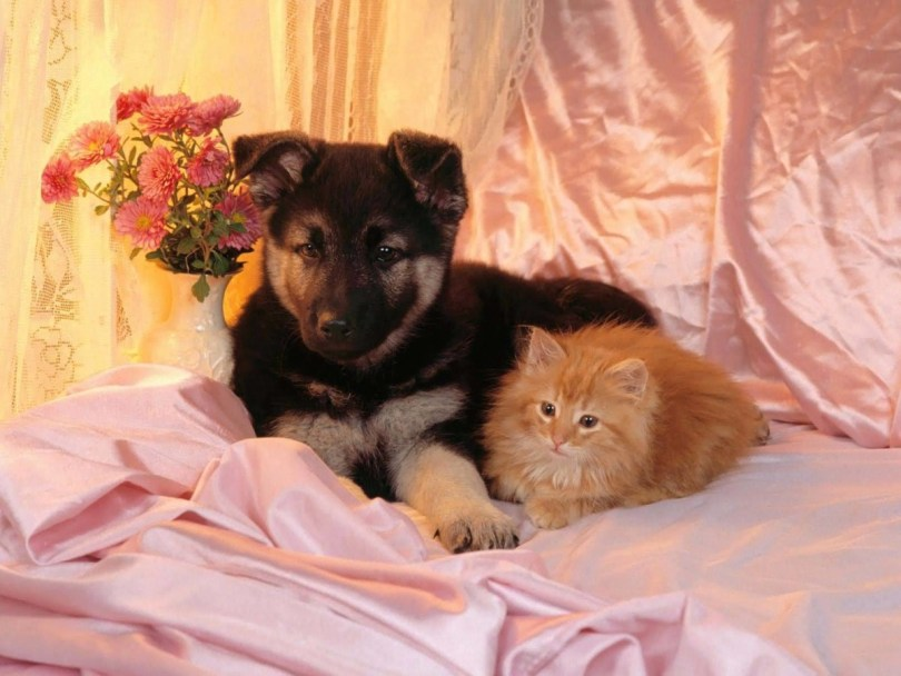 Very Cutedog And Cat On The Bed Full Hd Wallpaper