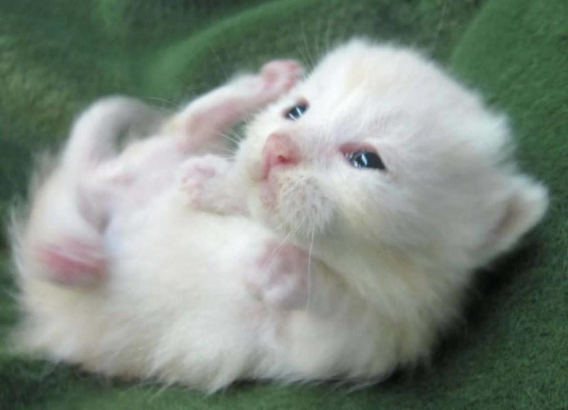 Very Small And Cute Pet Full Hd Wallpaper