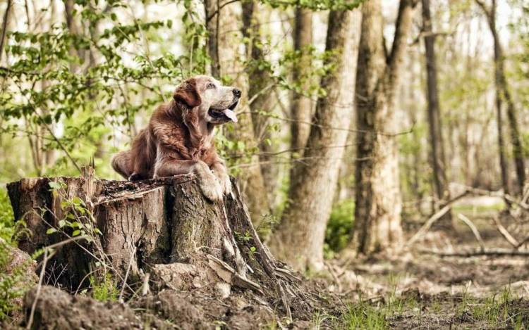 Wonderful Dog Middle Of The Jungle Big Full Hd Wallpaper