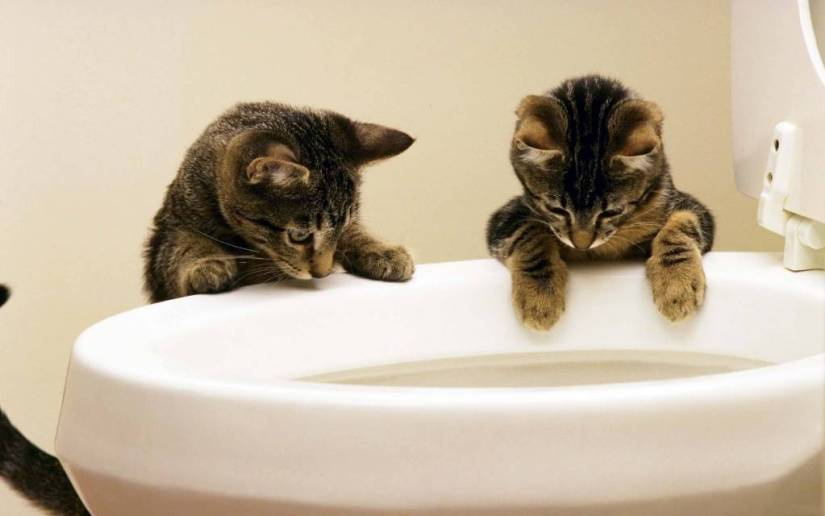 Wonderful Two Of The Cats Next To The Toilet HD 4K Wallpaper