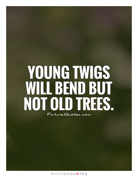Young twigs will bend but not old
