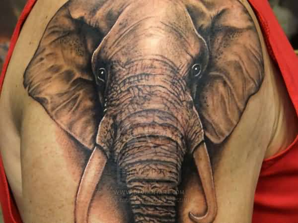 Attractive Old African Elephant Tattoo With Amazing Eyes For Man