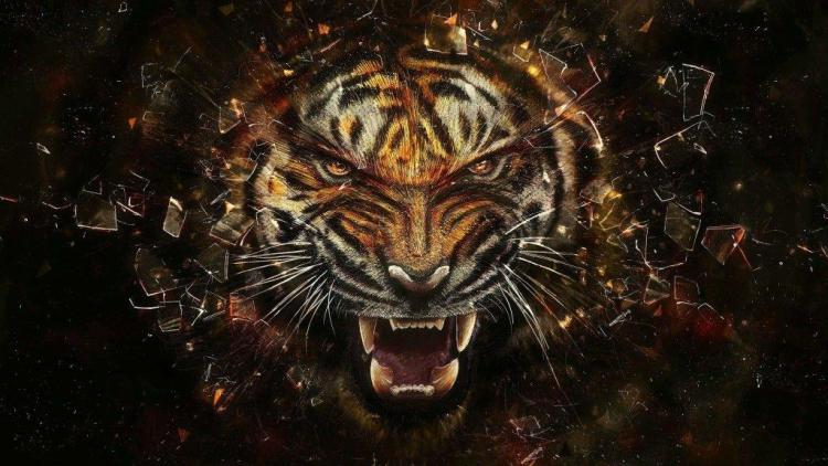 Awesome Glass Breaking Lion Professionally Full Hd Wallpaper