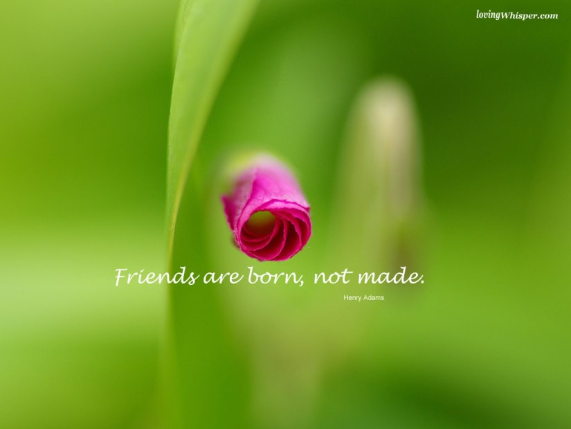 friends are born not made(henry adams)