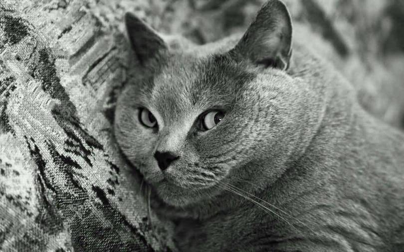 Stunning Black And White Gray Cat 4k Wallpaper