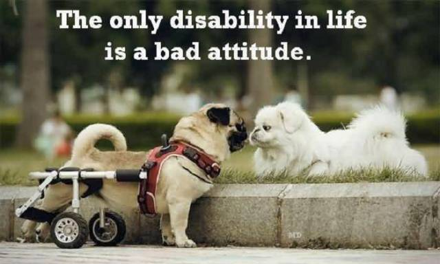 The Only Disablitity In Life Is A Bad Attitude Short Life Quotes