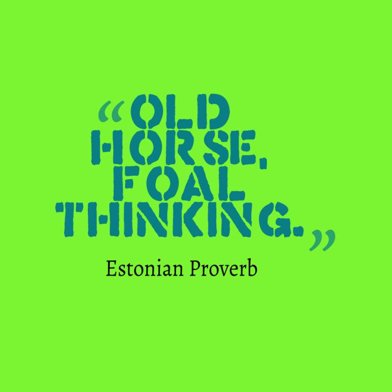 Age Sayings Old Horse Foal Thinking